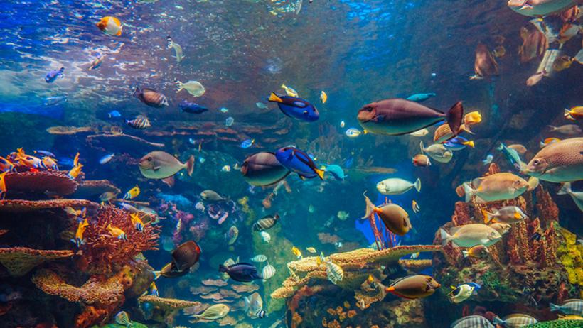Baltimore National Aquarium Tickets